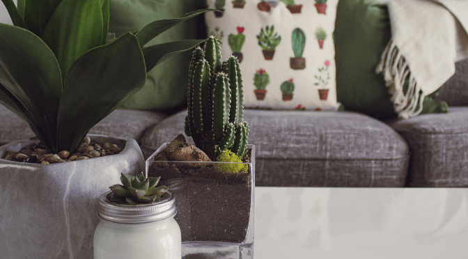 Can house plants cause damp?