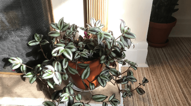 Do house plants need pots with holes?