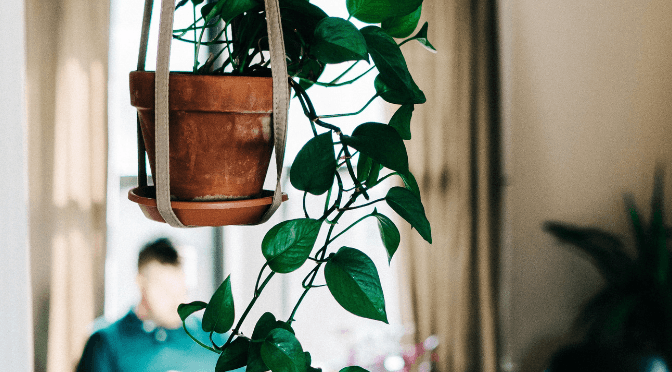 How often should you water indoor plants?