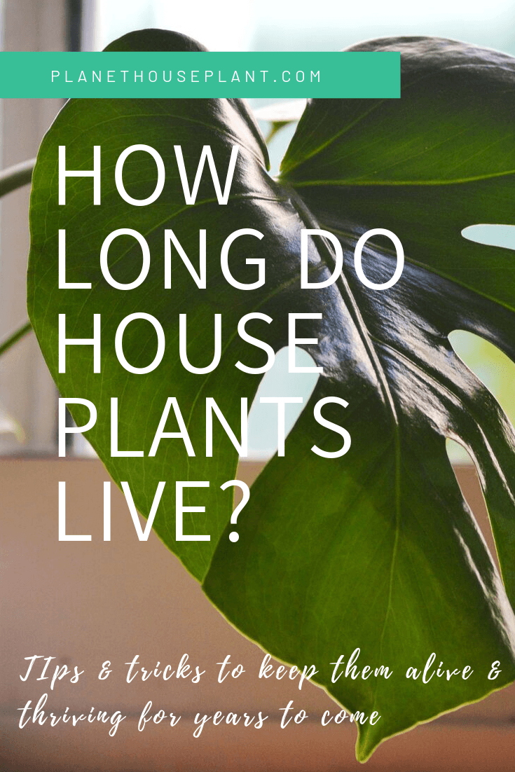 photo of monstera leaf with text overlay