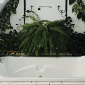 ferns and golden pothos around a bath