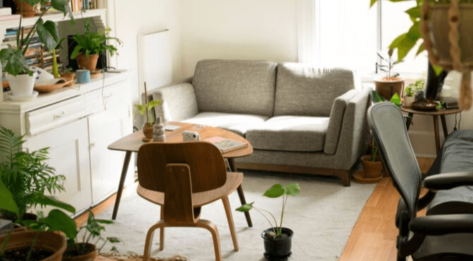 101 tips for keeping your house plants alive