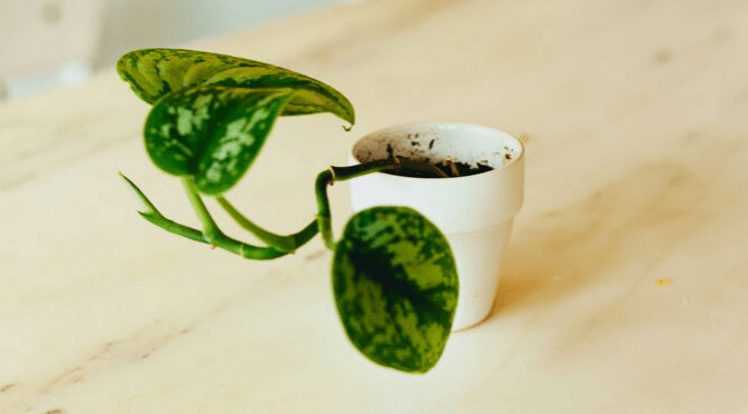 Fertilising your house plants: everything you need to know
