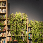 ivy on bookshelves