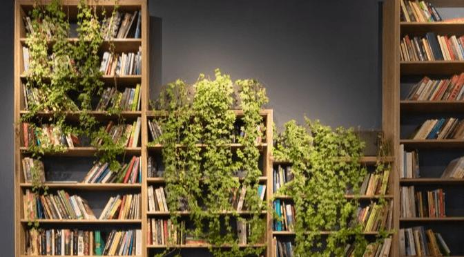 ivy on bookshelves