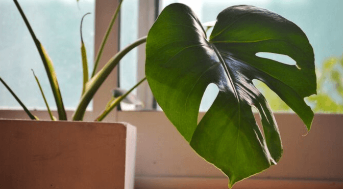 How to keep your house plants alive over winter