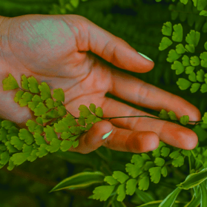 hand touching a maidenhair fern