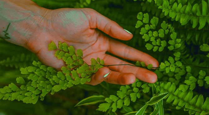 Plant Profile: how to care for…Maidenhair fern