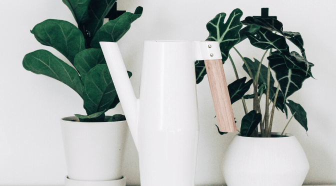 watering can and indoor plants
