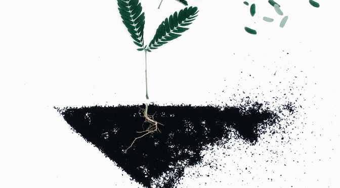 illustration of plant and soil