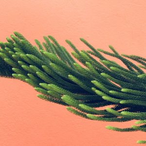 watchchain succulent